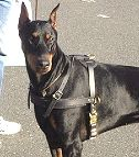 Agitation Leather Dog Harness For Doberman