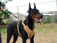 Leather Dog Harness Doberman