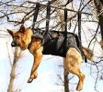 Tactical Insertion Rescue Nylon Dog Harness