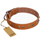 'Golden'n'Silver Luxury' FDT Artisan Leather Dog Collar with Engraved Studs 1 1/2 inch (40 mm) Wide