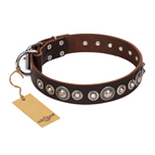 'Step and Sparkle' FDT Artisan Glamorous Studded Brown Leather Dog Collar