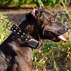 Fashionable Leather Pitbull Collar with Two Rows of Brass Spikes