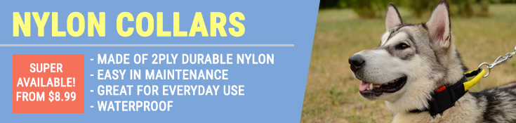 Nylon Collars are Made of 2Ply Durable Nylon, Easy in Maintenance, Great for Everyday Use and Waterproof