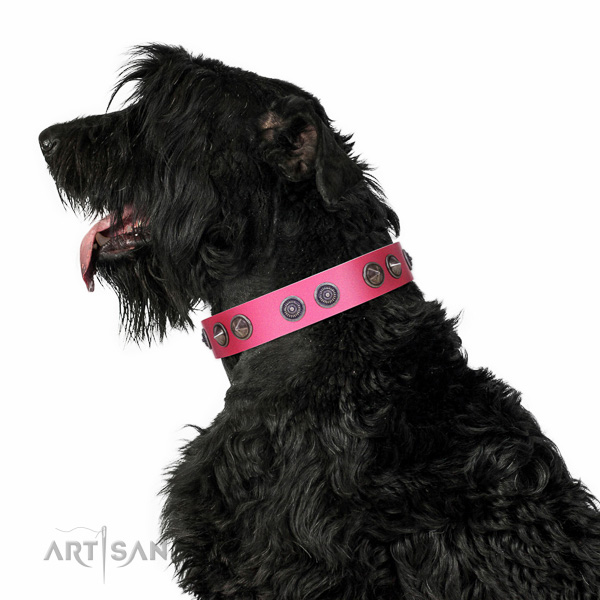 Extraordinary walking pink leather Black Russian Terrier