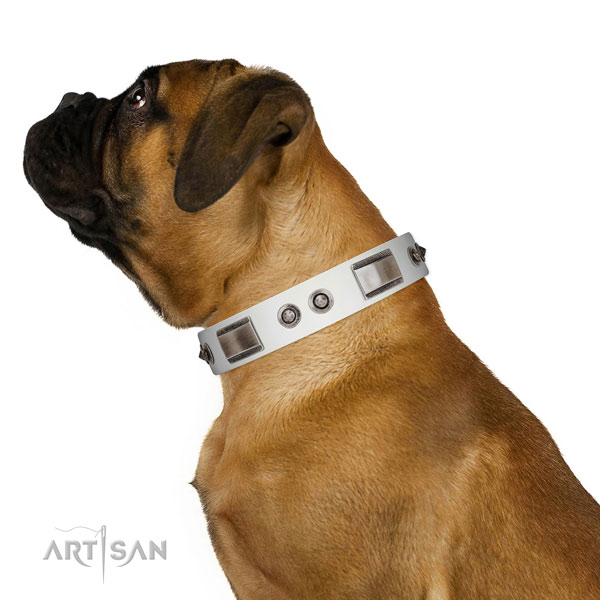 Adjustable leather Bullmastiff collar for walking