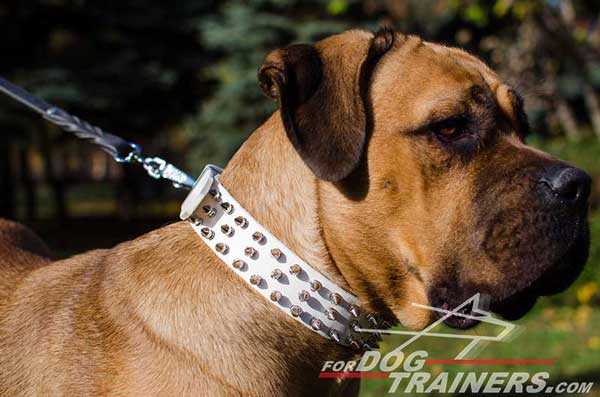 Spiked Leather Cane Corso Collar