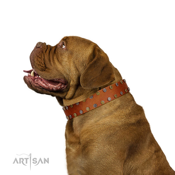 Top notch leather Dogue de Bordeaux collar of significant desig