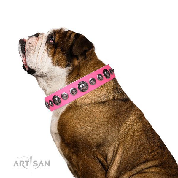 English Bulldog stylish design natural genuine leather dog collar with adornments