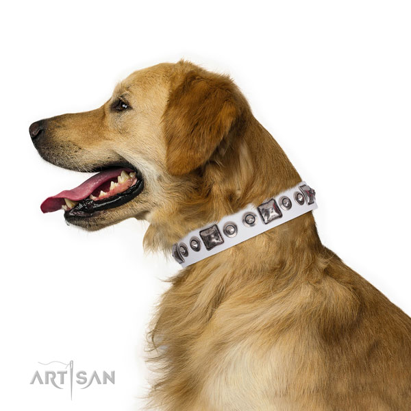 Golden Retriever amazing full grain genuine leather dog collar with studs