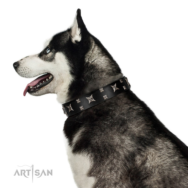 Elegant walking black leather Husky collar with