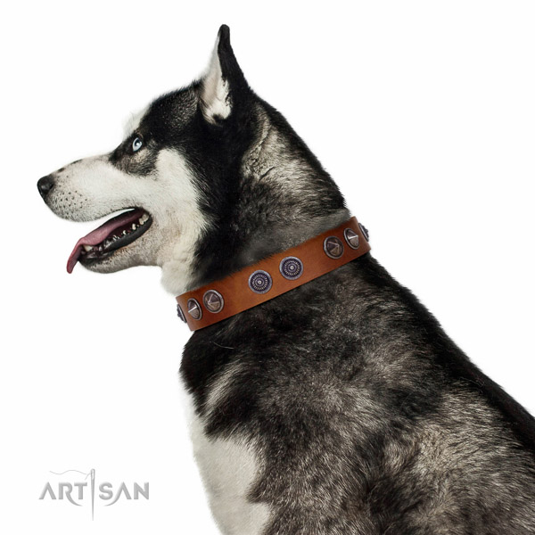 Extraordinary walking tan leather Husky collar with chic