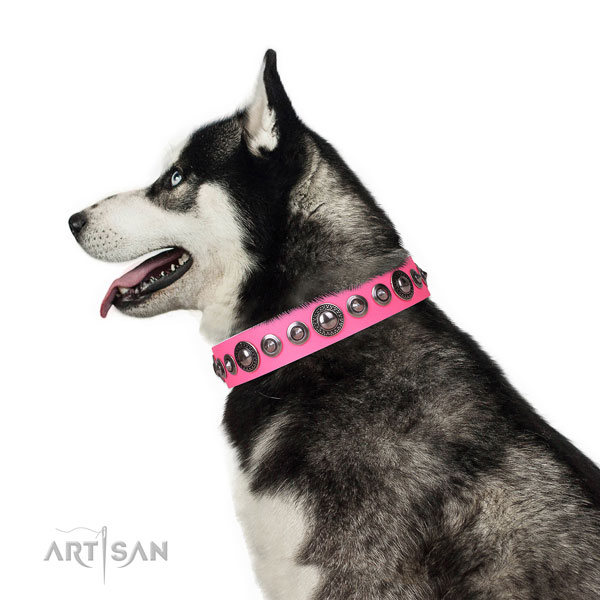 Husky amazing full grain natural leather dog collar with adornments