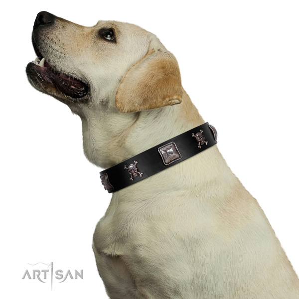 Gentle to Touch Genuine Leather Collar on Labrador