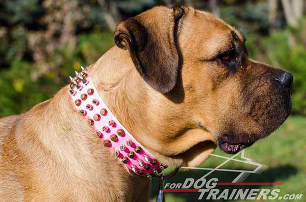 Deluxe Leather Dog Collar in Bright Pink