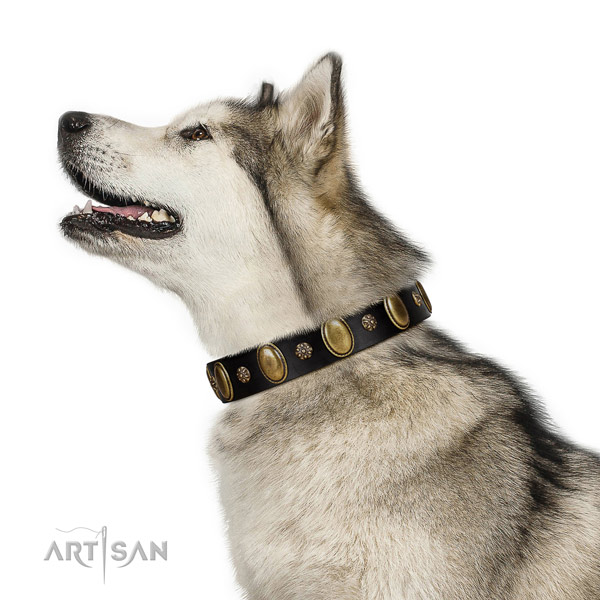 Comfortable wearing Malamute collar of stylish leather