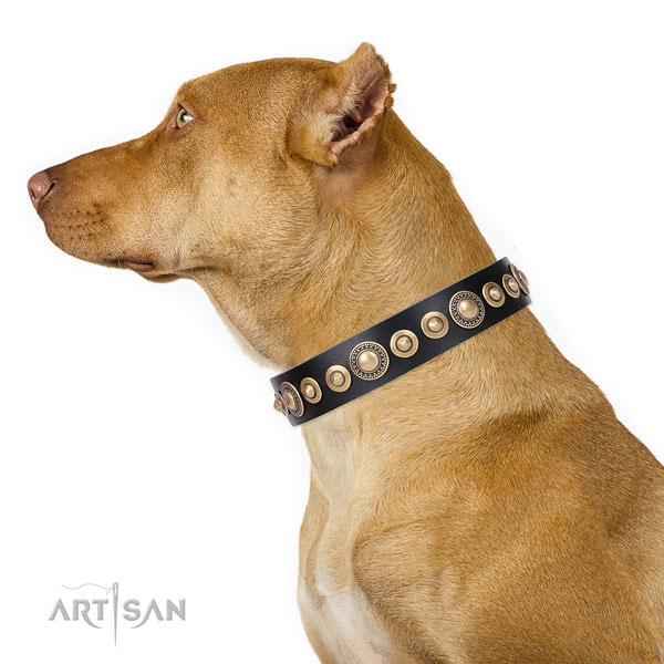 Pitbull stylish design leather dog collar with decorations