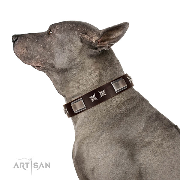 Adjustable leather Thai Ridgeback collar for daily walking