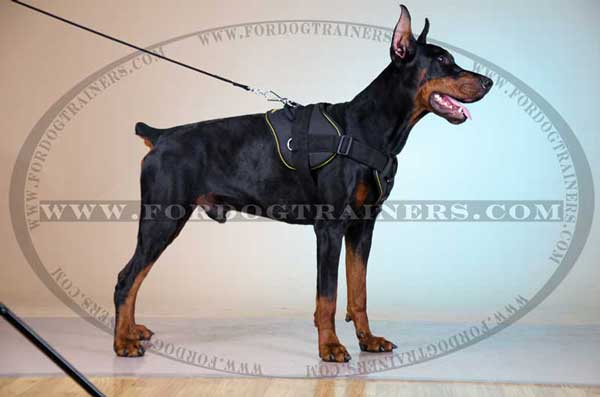 Nylon Doberman Harness for Walking and Training