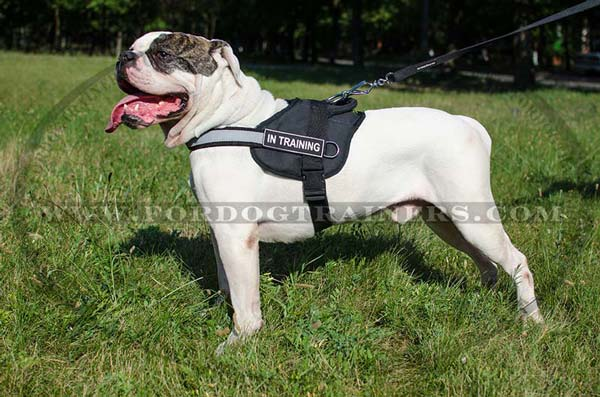 Nylon Harness for American Bulldog