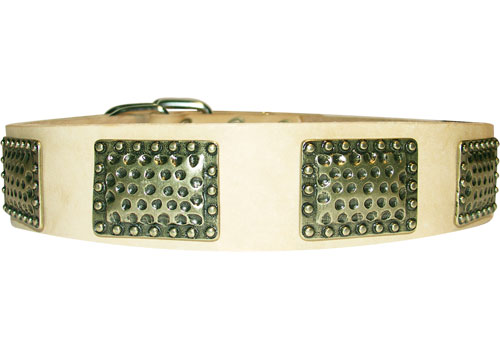 StylishLeather Dog Collar Adorned in War Style