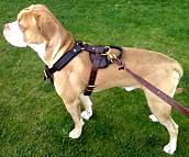 Reliable Leather Dog Harness for Agitation/Protection/Attack Work